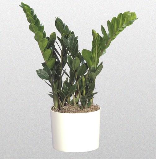 Популярные комнатные растения фото